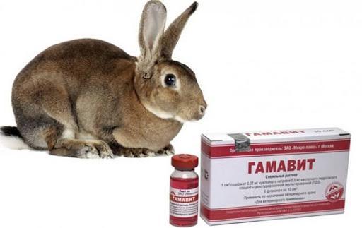 гамавит для кролей