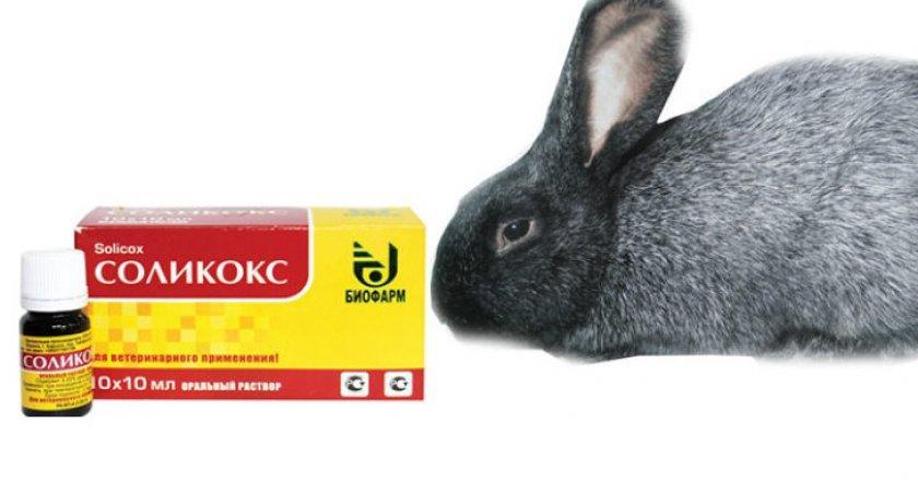 соликокс инструкция по применению для кроликов