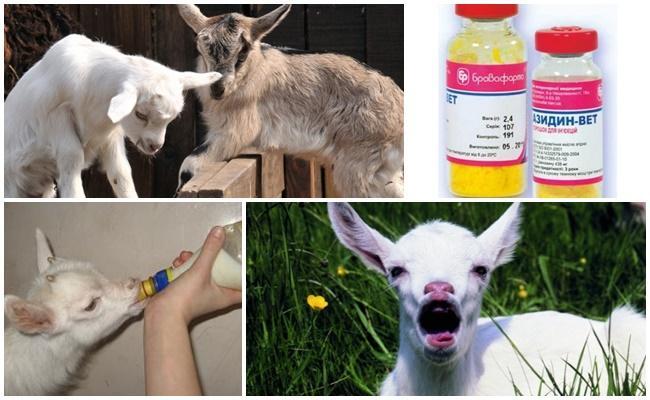 лечение козлят