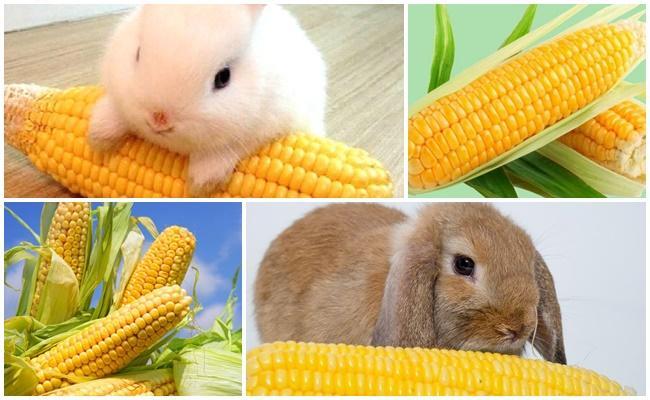кукуруза кролику