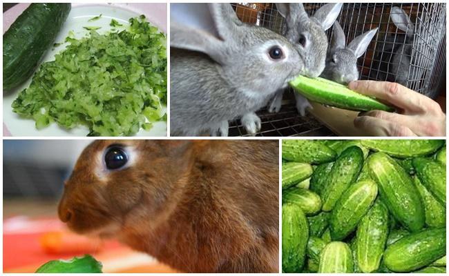 огурцы кроликам
