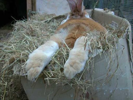 сено для кролей