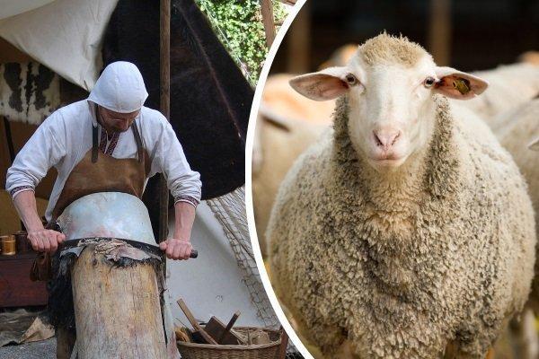 выделка овечьей шкуры в домашних условиях