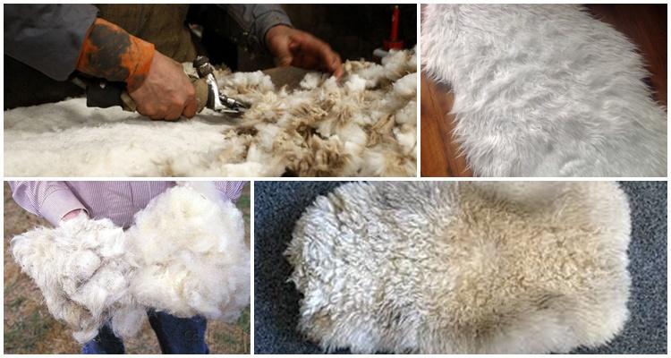 продукция овцеводства