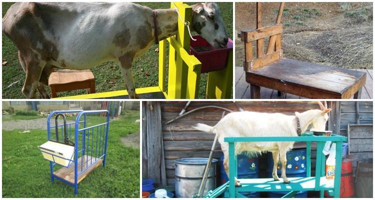 станок для дойки коз