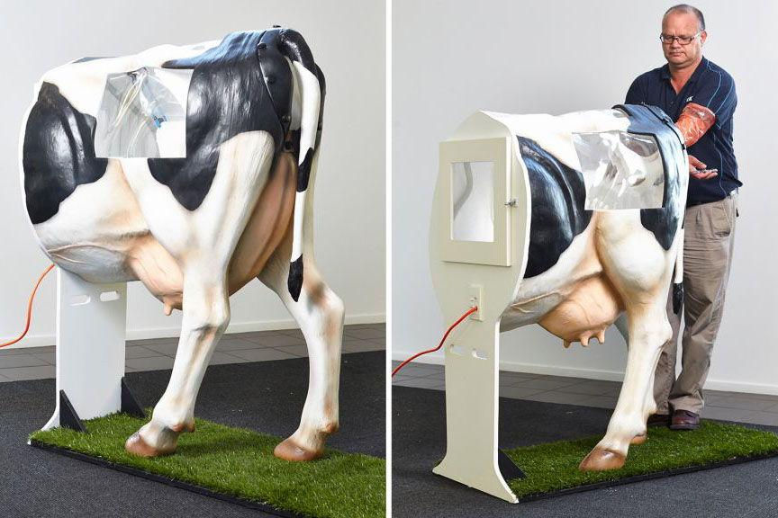 осеменяют коров