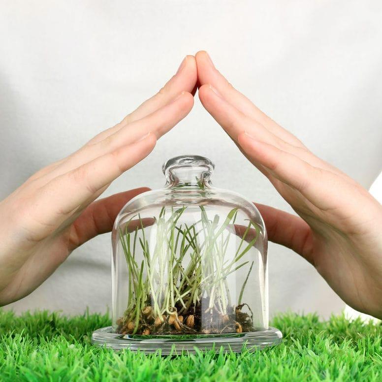 защиты растений