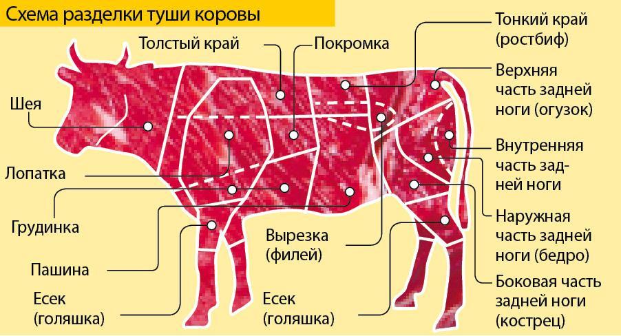 части тела коровы
