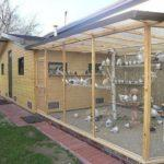 Все о голубях породы турманы- происхождение и виды