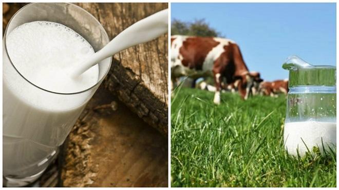 у коровы пропало молоко