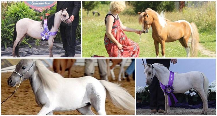 американская лошадь