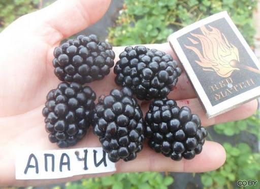 Скаковое седело лошадей