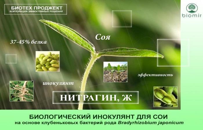листок сои
