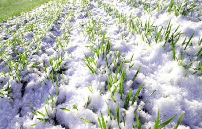 снег лежит
