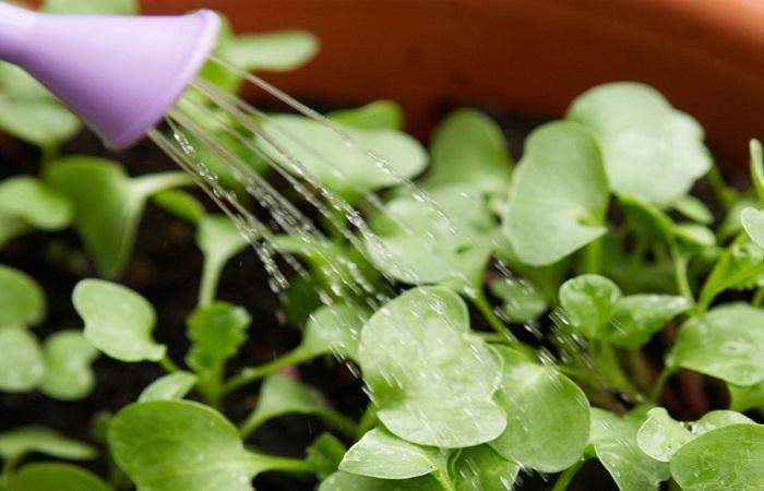 полить растение