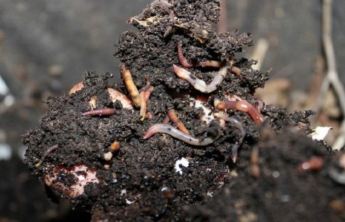 черве в почве