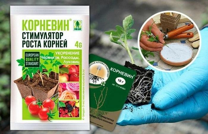 корешки растений
