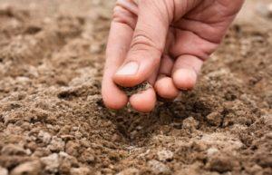 Перечень питательных веществ в почве, как они поступают и поглощаются