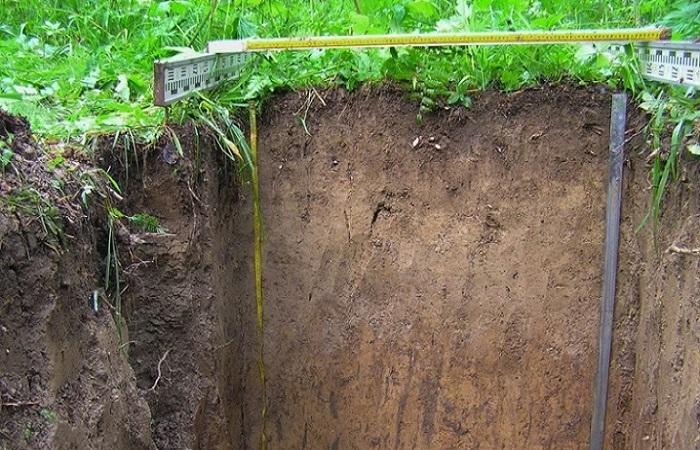 почва дерновая