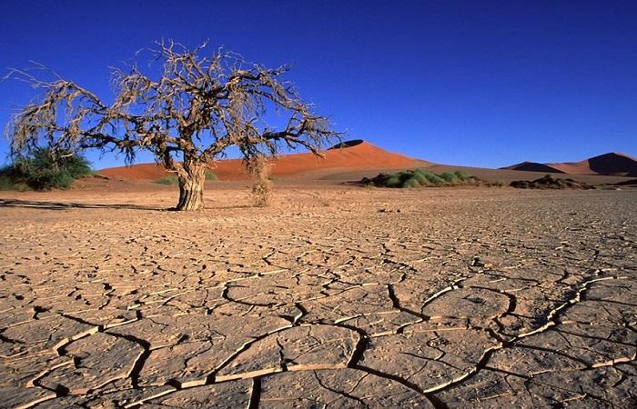 треснута почва
