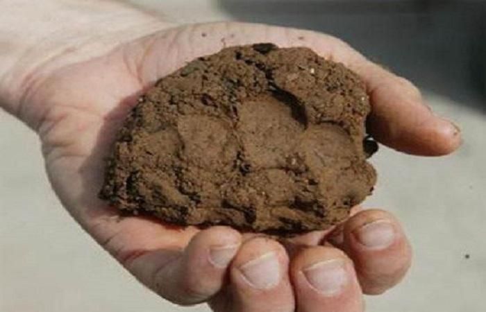шарик из почв