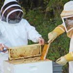 как собирают мед
