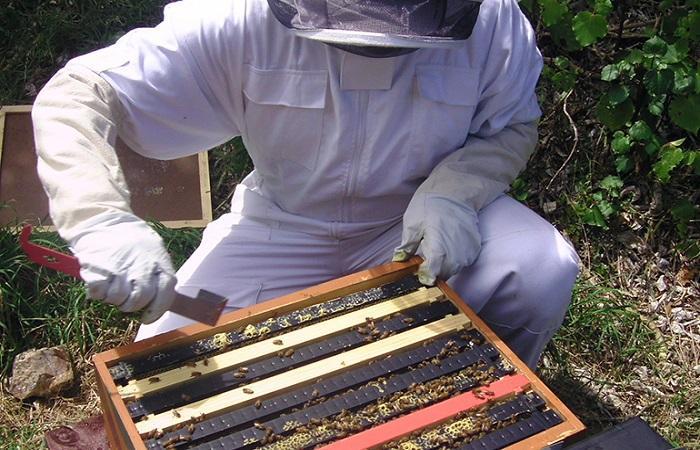 пчеловод собирает