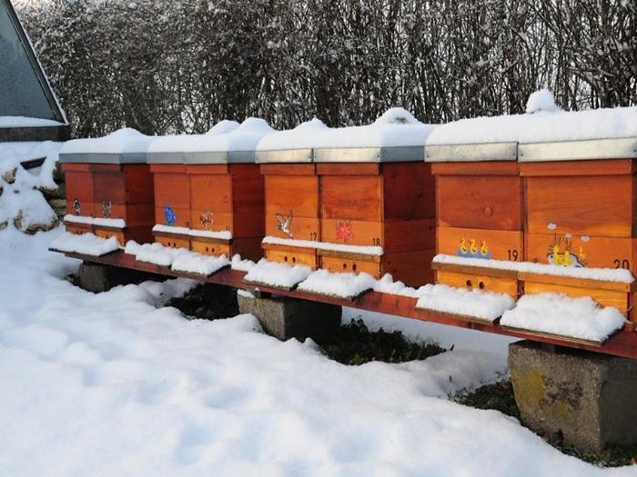 помещение для зимовки пчел