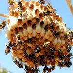 как избавиться от пчел в доме