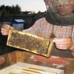пчеловодство в Ленинградской области