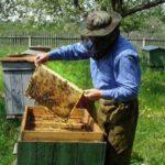 пересадка пчел в новый улей осенью